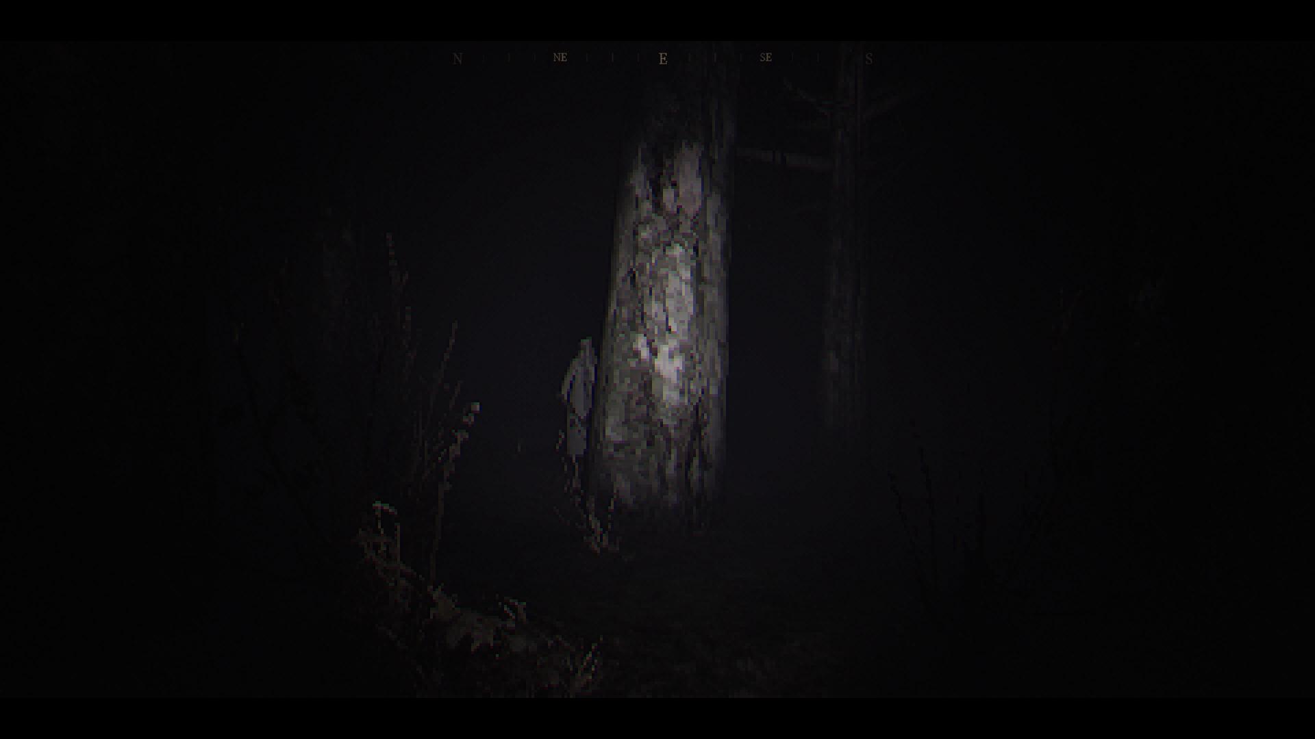 woods-4.jpg
